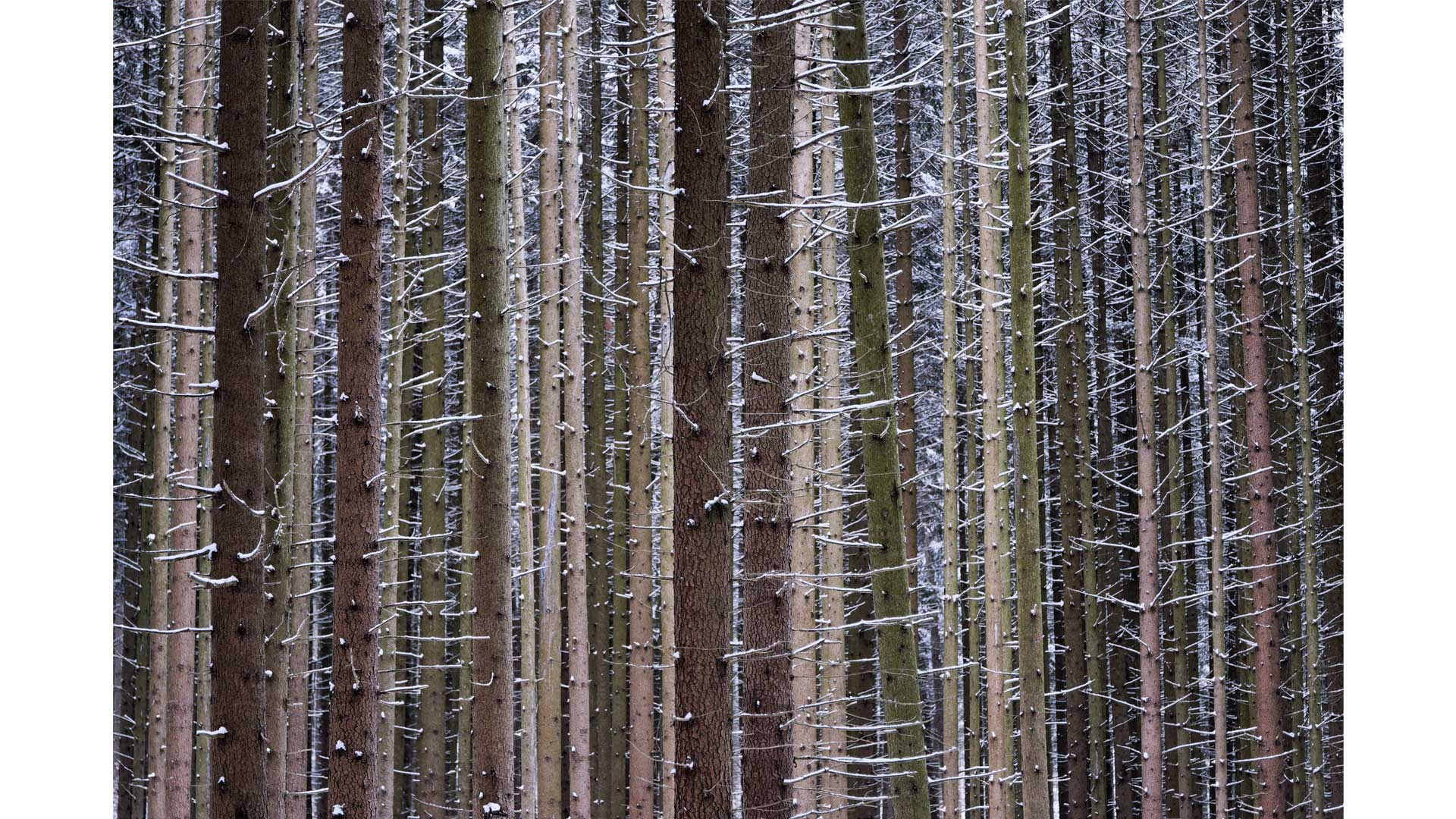 Winter – Suse Güllert Fotografie
