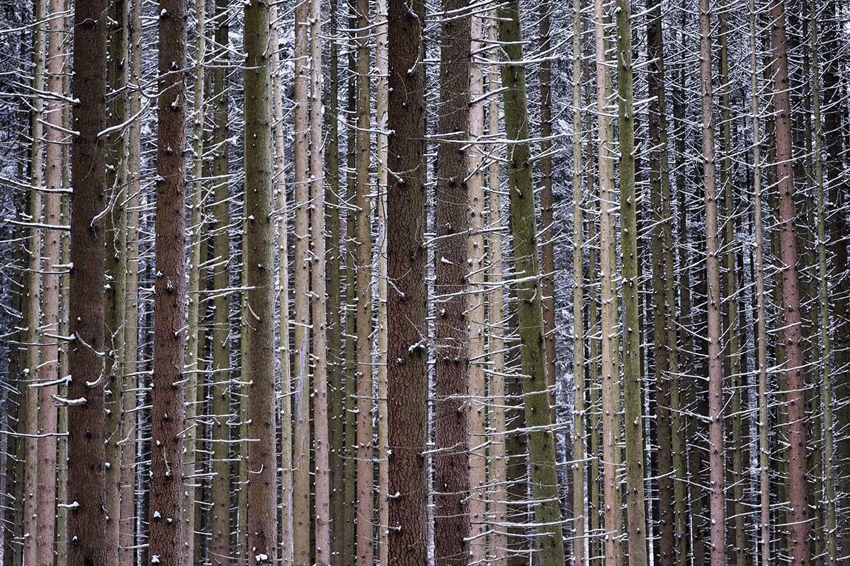 Winter – Suse Güllert
