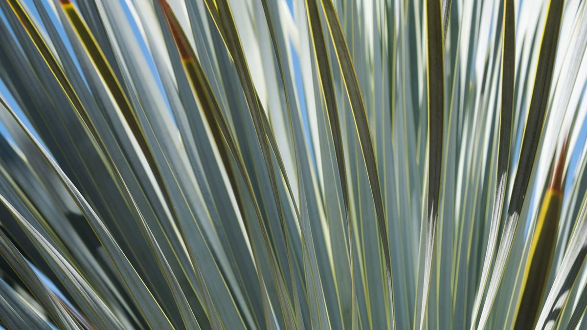 Palme mittags – Suse Güllert