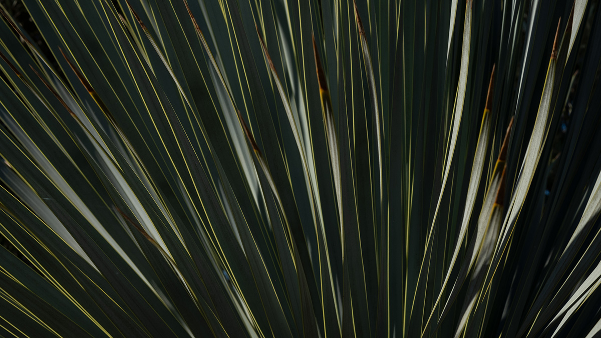 Palme abends – Suse Güllert