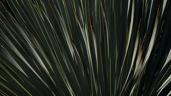 Palme abends – Suse Güllert Fotografie